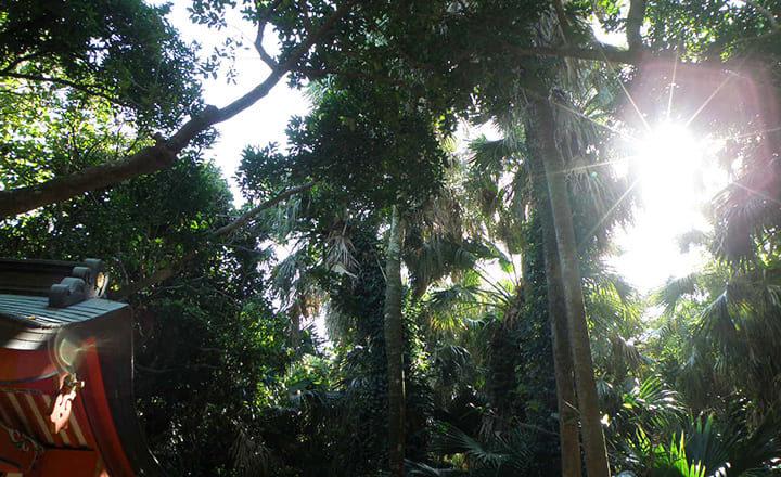 青島神社の亜熱帯植物